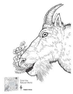 Download a sample from the new coloring book COLOR THE NATURAL WORLD.