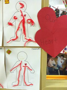 Draw an outline of a body. Draw a heart and discuss how the heart pumps the blood to keep our body healthy. The red string was glued on by my students showing me where the blood goes from the heart.