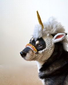 Dog with crocheted unicorn hat