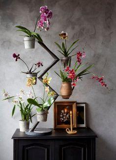 Dutch Designer Francois Hannes #Orchid Plant Étagère: Orchid Twister! #FrancoisHannes