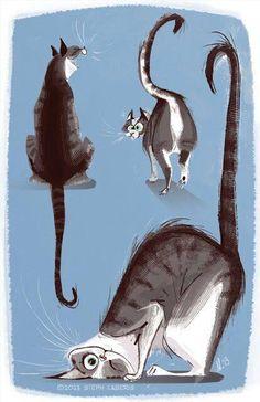 The front cat-ha