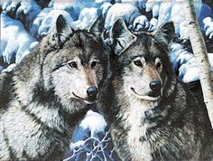 Dufex Prints - Winter Wolves