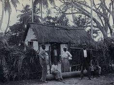 Local House, Jamaica