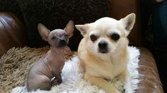 Dushi en Buddy