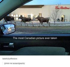 When you see something like this, that means you are in Canada. Enjoy hilarious meanwhile in Canada photos and funny Canadian life pics. Humour Canada, Canada Jokes, Canada Funny, Canada Eh, Canadian Memes, Canadian Things, Canadian Girls, Canadian Humour, Canadian Stereotypes