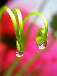 Spirals & waterdrops #nature #pink