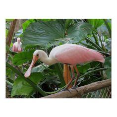 Pink Tropical Roseate Bird Poster
