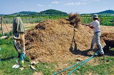 Kompost za 18 dní