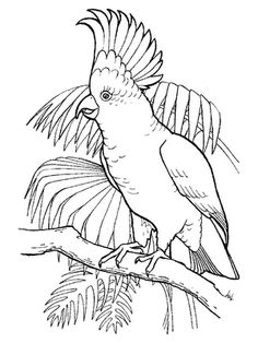 Oklahoma Scissor-tailed Flycatcher Coloring Page | Purple ...