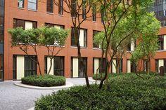 Koelreuteria paniculata, multistemmed trees at Jeroen Bosch Hospital, MTD landscape architects with Ebben trees.