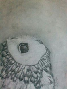 'Owl' by Elizabeth Douglas