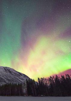 northern lights.  #aurora #lifeonearth
