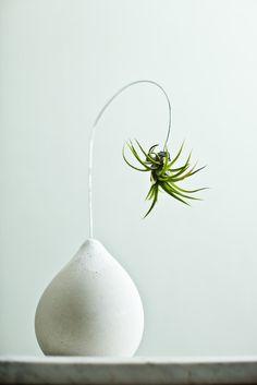 ceramic + air plant