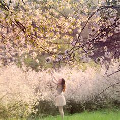 Blossom Picking