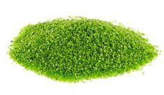 Dekokies, 1,2-1,8 mm, 1 kg, grün - Farbiger Kies für Ihre kreativen Dekoideen.Material: Kies