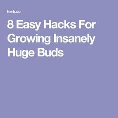8 Easy Hacks For Growing Insanely Huge Buds