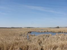 Laura Ingalls Wilder: A view of the Big Slough in De Smet, S.Dakota. It's exactly as I pictured it--Laura really had a knack for vivid description.