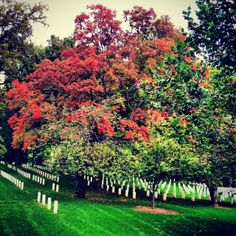 Gorgeous fall foliage at the Arlington National Cemetery in Washington DC. #fall #DC