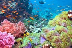 Off the gulf of Thailand is a resort island that is specifically dedicated to scuba diving as it is surrounded on all sides with colorful reefs. Description from satellitesportsnetwork.com. I searched for this on bing.com/images
