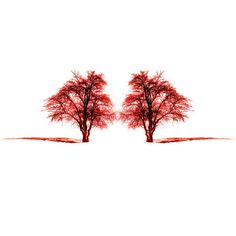 Love valentines day two tree red tree Nature Photography by gonulk, $30.00