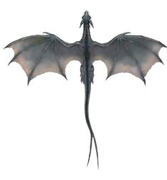 Image detail for -Gray Dragon (overhead).png