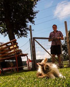 """das ist JayJay, einer der kleinsten Bewohner auf dem """"glücklichen Geflügelhof"""" bei Familie Andreas Pongratz http://schnatterhuhn.de/aloeveragel-fuer-katzen/"""