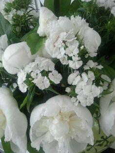 Pioen rozen