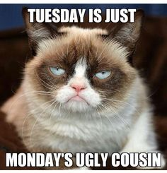 Tuesday is just Monday's ugly cousin Grumpy Cat Quotes, Funny Grumpy Cat Memes, Funny Cats, Funny Animals, Cute Animals, No Cat Meme, Cats Humor, Grumpy Cats, Hilarious Memes