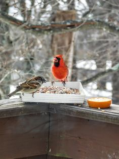 Photo in Birds In Our Yard 1 of 5 - Google Photos