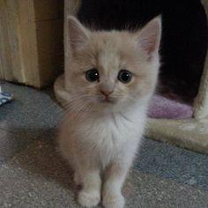 Hi I'm Minion!