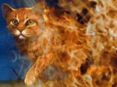 15 Best Warrior Cats Images On Pinterest