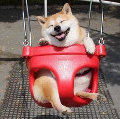 柴犬「ブランコ乗りたいンゴ…」 : ワラノート