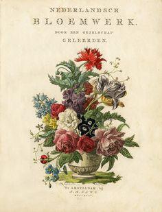 Nederlandsch bloemwerk, door een gezelschap geleerden. 1794. - antique botanical print
