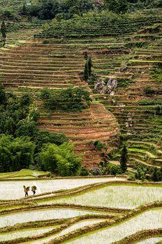 Rice Terraces China