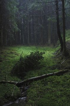 Dark Green Aesthetic, Nature Aesthetic, Slytherin Aesthetic, Deep Forest, Foggy Forest, Pine Forest, Magical Forest, Beautiful World, The Great Outdoors