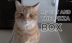 Cat Loves Pizza Box Above All Else