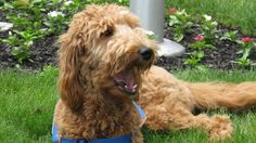 Pet Therapy:Funeral Home Dogs; consider Hospice Therapy Dog and volunteers