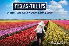 http://www.texas-tulips.com/