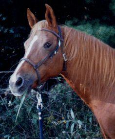 Just A Horse Horse Poems, Horses, Animals, Animales, Animaux, Animal, Animais, Horse