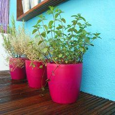 herbs in colourful pots, Un jardin aromatique en pots colorés