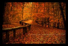 Autumn --- this looks exactly like a trail near my house, but the trees here turn yellow, not red.