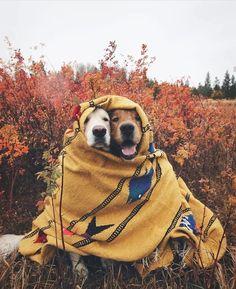 Adorable doggies!!! Enjoying fall