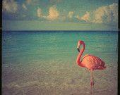 Flamingo art photo - 8x8 photo with a stunning pink flamingo BOGO SALE