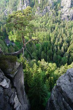 @ Bastei/ Sächsische Schweiz in Germany.