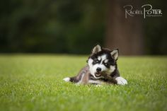 Click It Up a Notch - Pet Photography Questions and Answers  pet photography by rachel potter  #pets #photography