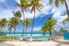 Palm Trees and a cute beach