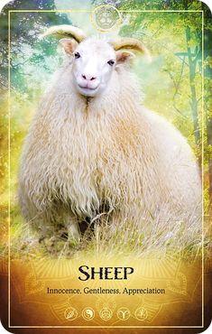 Animal Spirit Guides, Animal Symbolism, Oracle Tarot, Angel Cards, Tarot Reading, Tarot Decks, Tarot Cards, Ark, Sheep