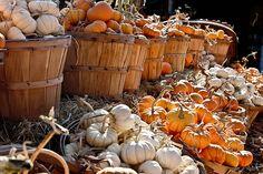 Pumpkins For Sale, Mini Pumpkins, Garden Center Displays, Garden Centre, Pumpkin Display, Squashes, Farm Stand, Assemblage, Color