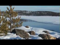 Safaris in Lapland Safari, Homeland, Cabo, Where To Go, Video, Winter Wonderland, Places To Visit, Pictures, Travel