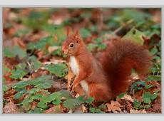 Squirrel Art, Chipmunks, Otters, Wolf, Squirrels, Rabbits, Animals, Image, Sick